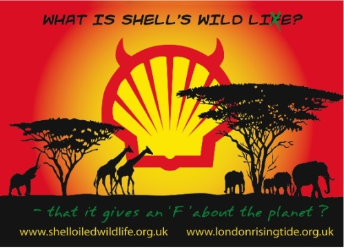 ShellWildLieFinal
